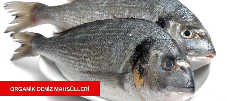 Deniz Mahs�lleri 0553 261 60 67 bakliyat baharat bal �ay deniz mam�lleri gurme paketleri i�ecekler kahve hurma kuru meyve