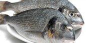 organik y�resel deniz mam�lleri